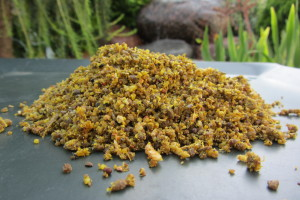 Birdfood insect